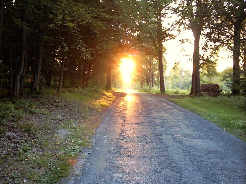 Šuma SunForest-FondEcranSW1024